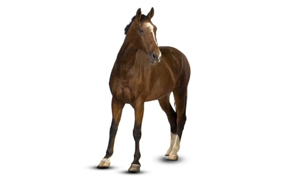 Horse first image