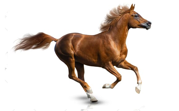 Horse second image