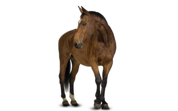 Horse third image